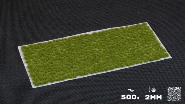 tiny_dry-green.jpg